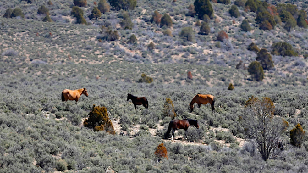 Utah ranchers sue to force wild horse roundup as conservationists question grazing on public land