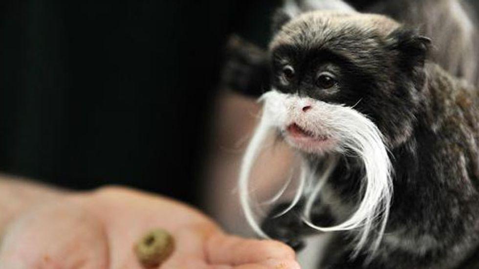 Five rare tamarin monkeys stolen from England's Blackpool Zoo