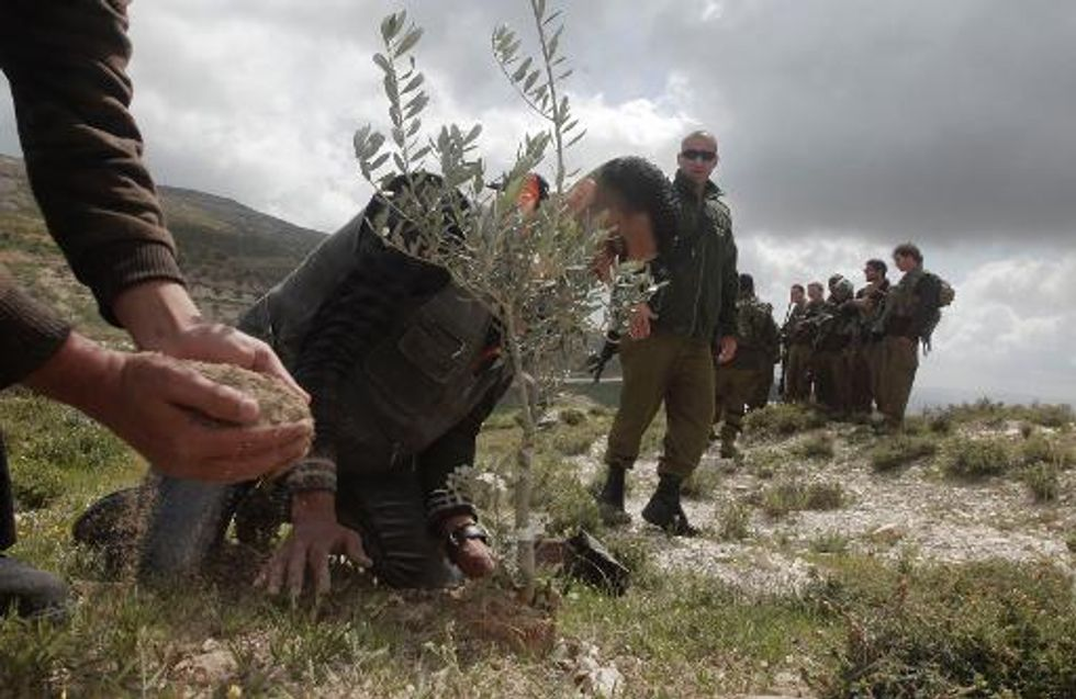 Jewish extremists uproot West Bank olive trees