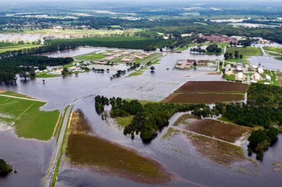 Hog deaths, manure flooding from Florence seen surpassing 2016 hurricane