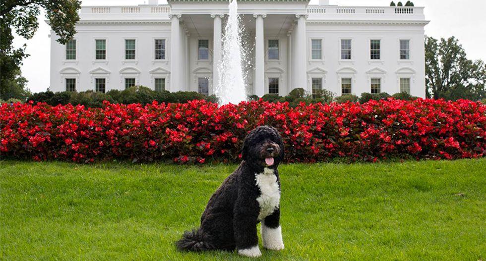Trump White House accidentally uses photo of Obama's dog Bo to tout their tax proposal