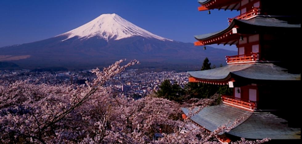 WATCH: Drone captures Fukushima desolation amid cherry blossoms