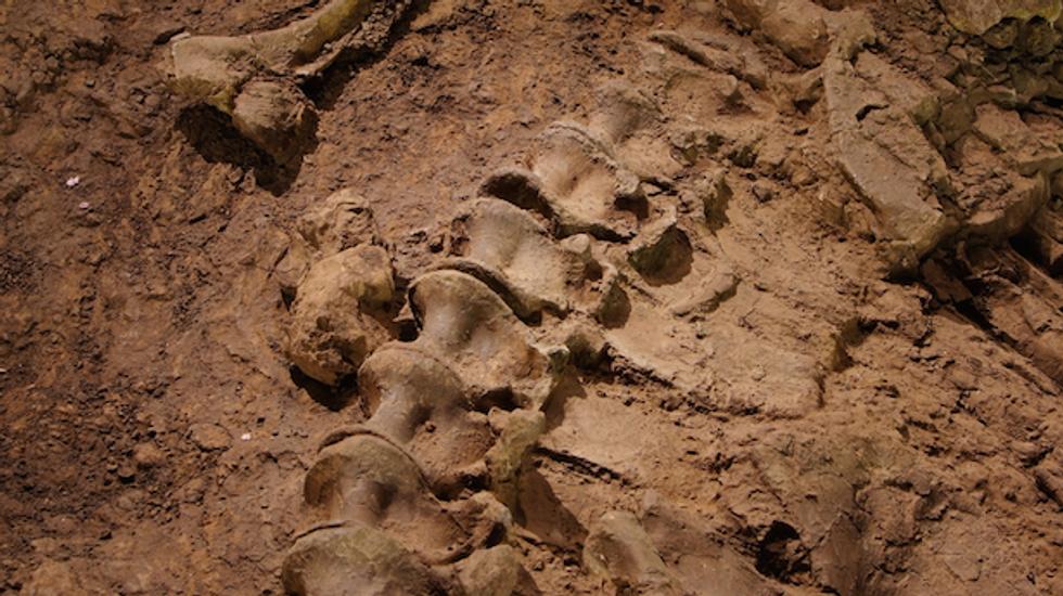 Scientists unearth unique, long-necked dinosaur in Argentina