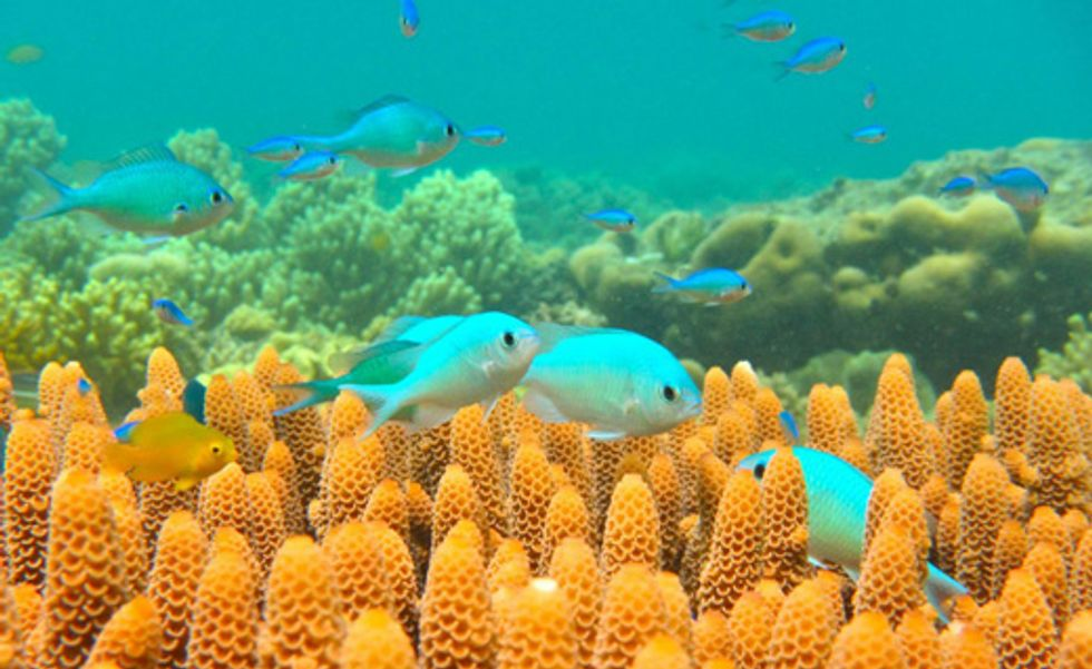 Climate change threatens fish living near the Equator