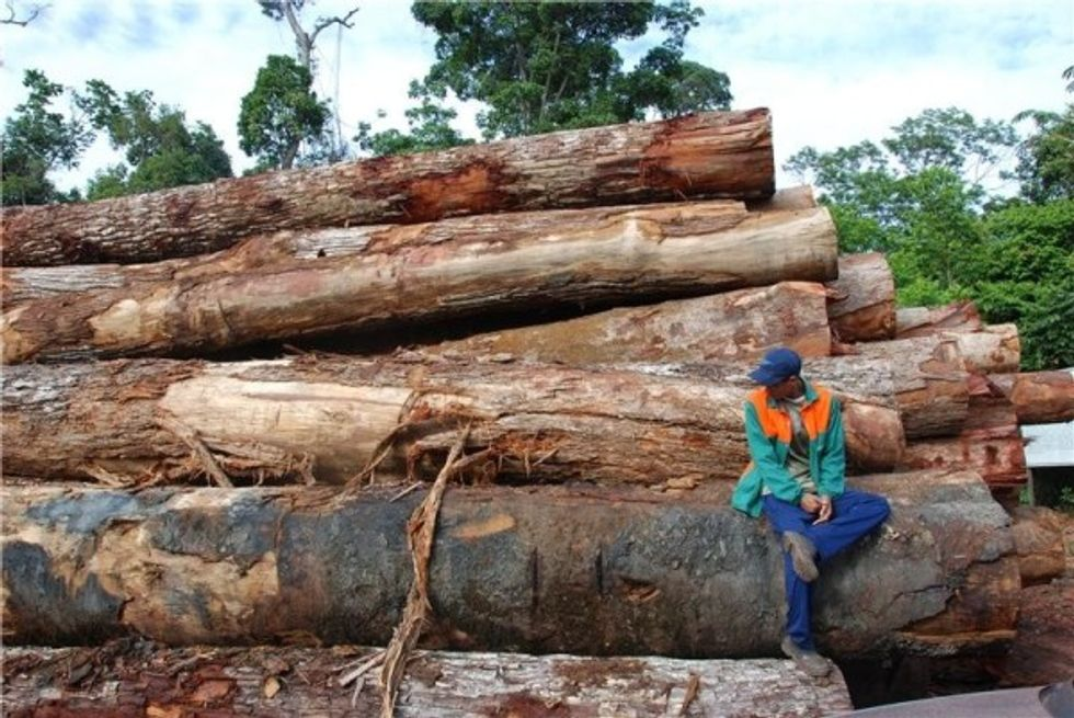 Human impact on Amazon via deforestation, logging and fires is greatly underestimated, research finds