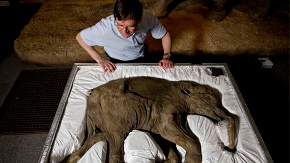 Scientists to mark the 150th anniversary of the discovery of the La Madeleine mammoth