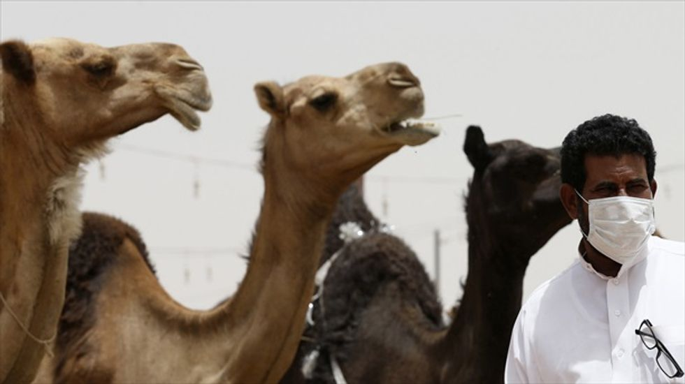 Saudi researchers point to camels as source of MERS outbreak