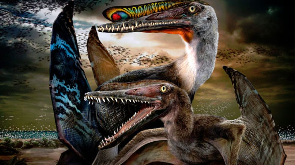 Stunning fossil eggs provide insight on gender differences of ancient flying reptiles