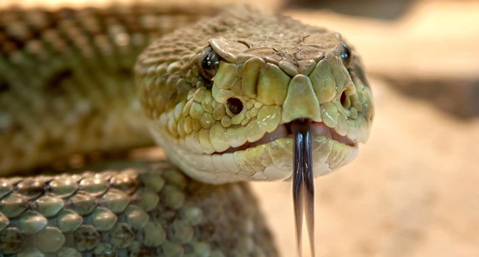 Texas law bars parents from suing schools -- even when their children fall into a den of rattlesnakes