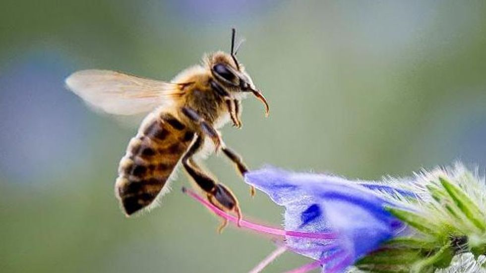 Climate change is disrupting flower pollination, research shows