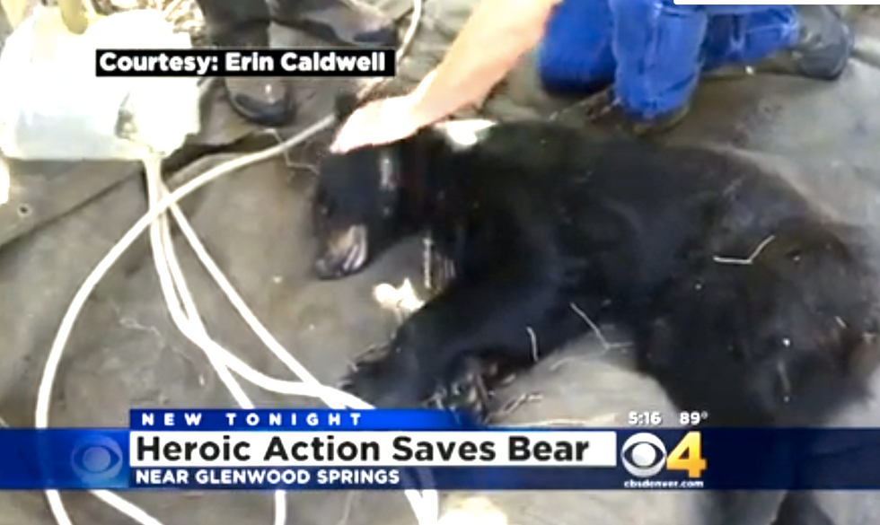 WATCH: Colorado neighbors work together to free black bear with plastic jug stuck on his head