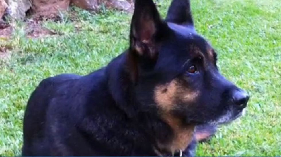 Georgia cop shoots dog, threatens owner with arrest when he attempts to take dog to the vet