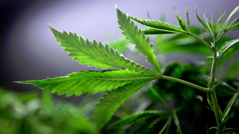 Florida support for medical marijuana stays near 90 percent: poll
