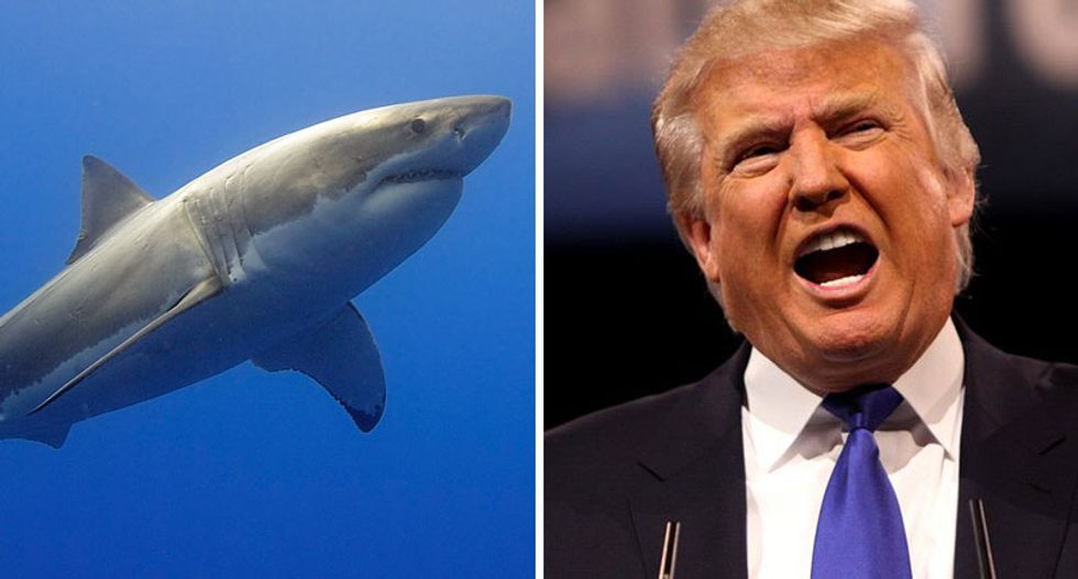 MSNBC's Ari Melber dissects Trump's strange fascination with sharks: They represent 'something he can't control'