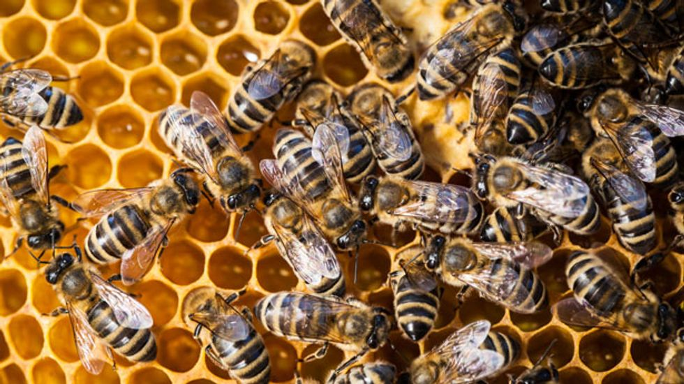 #Beeghazi!: The conservative war on Obama, science, common sense, and bees
