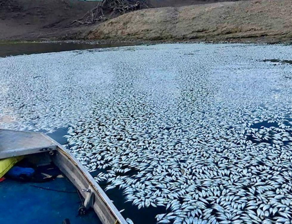 Australia river agency pilloried amid mass fish deaths