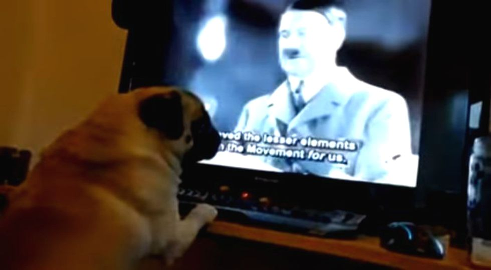 InfoWars hero who 'turned his dog into a Nazi' on trial for committing a hate crime