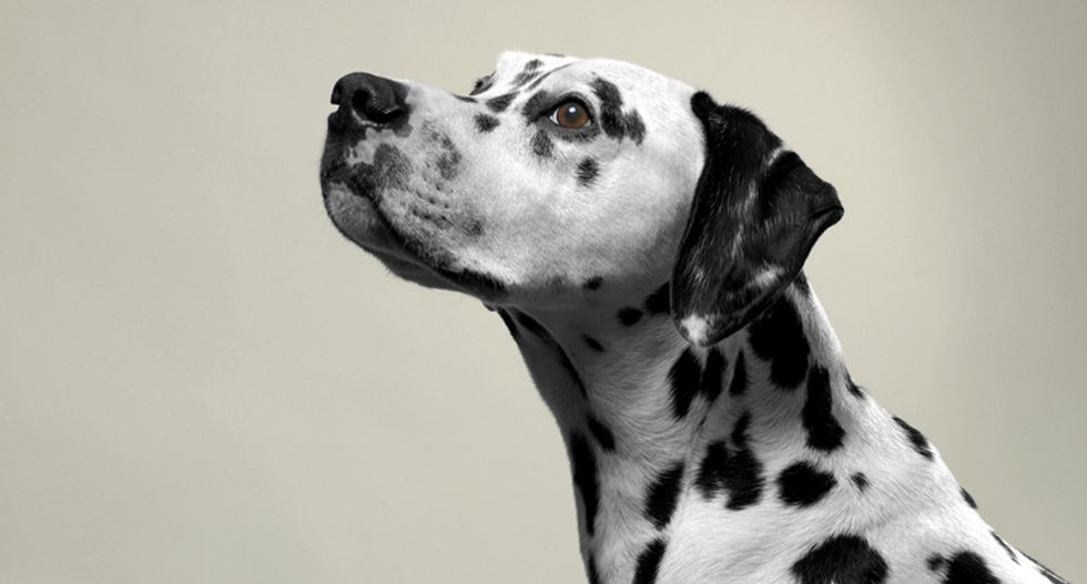 Animal cruelty case against US senator's son dropped in Arizona dog deaths