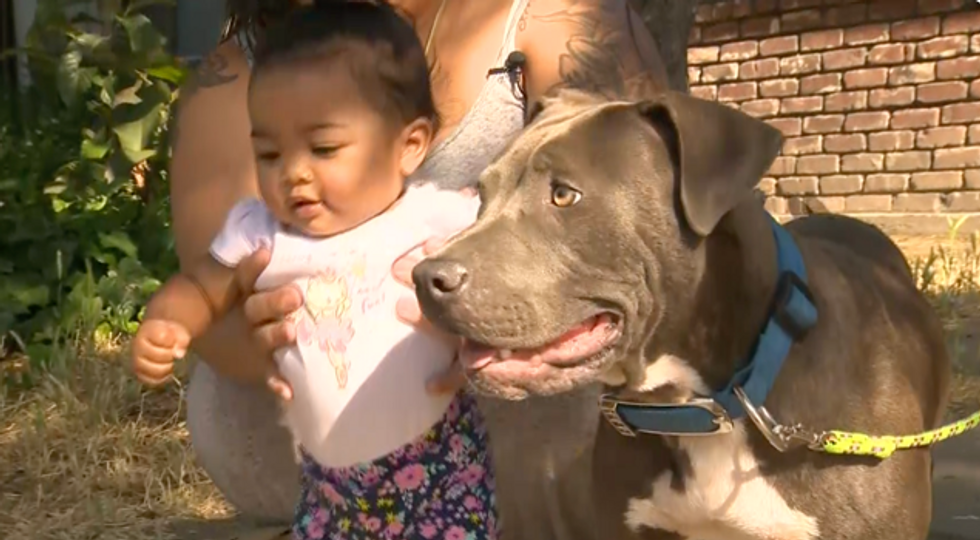 'Hero' pit bull saves her family from a fire — and tries to drag a baby to safety