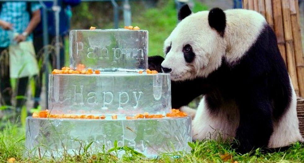 World's oldest male panda dies