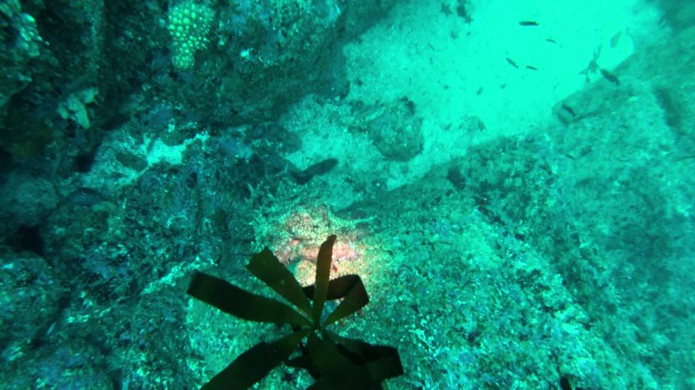 WATCH: 8-Foot octopus wrestles camera from diver