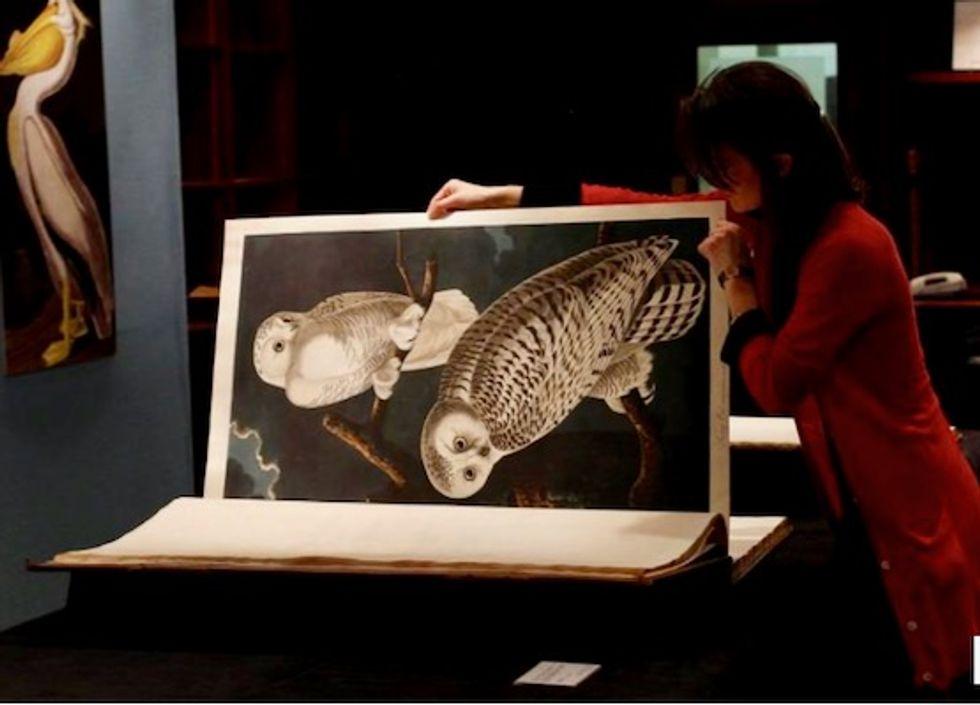 Rare Audubon 'Birds of America' sells for $9.6 million in New York