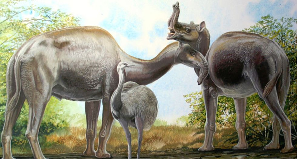 Biochemical analysis solves mystery of Charles Darwin's strange South American mammals