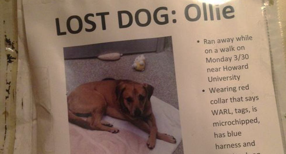 DC police threaten dog owners with $750,000 in fines for posting missing dog fliers