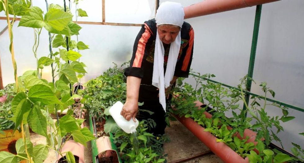 Rooftop gardens link Palestinians to land lost in Nakba