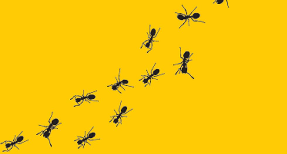 Ants use math to plan their routes