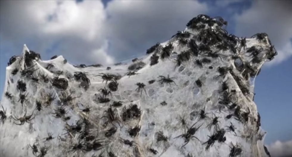 Man's home covered in cobwebs after being pelted with 'rain' of millions of baby spiders