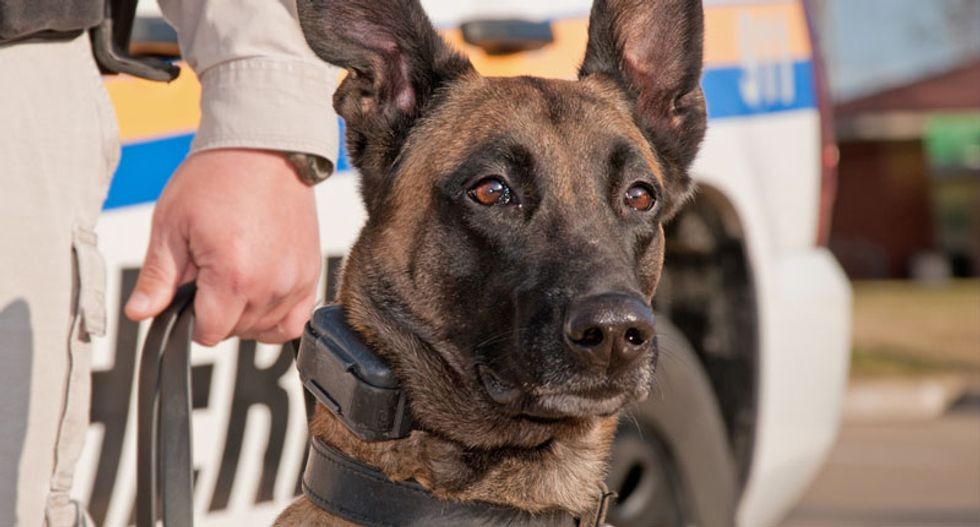 Illinois police official threatens to euthanize K-9 drug search dogs if the state legalizes weed