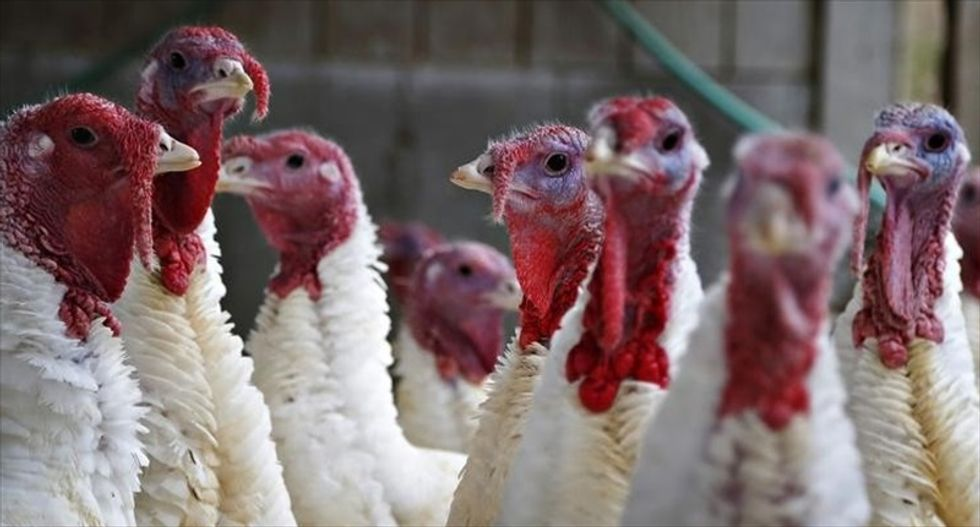USDA turkey report hints at fewer birds for Thanksgiving meals