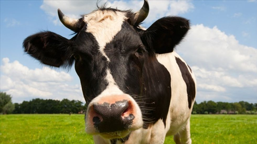A 'demitarian' diet: Halving meat and dairy consumption could slash farming emissions