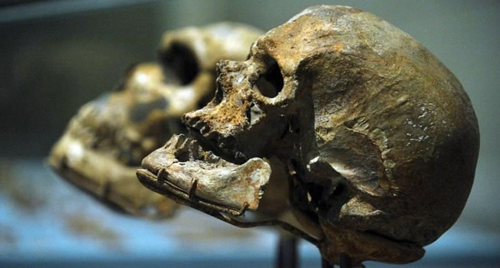 Dramatic wall of skulls to be built at London museum to illustrate human evolution