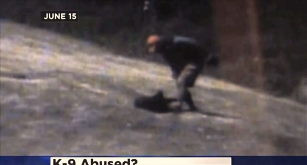 Minnesota sheriff's deputy caught on video slamming, hitting K-9 partner