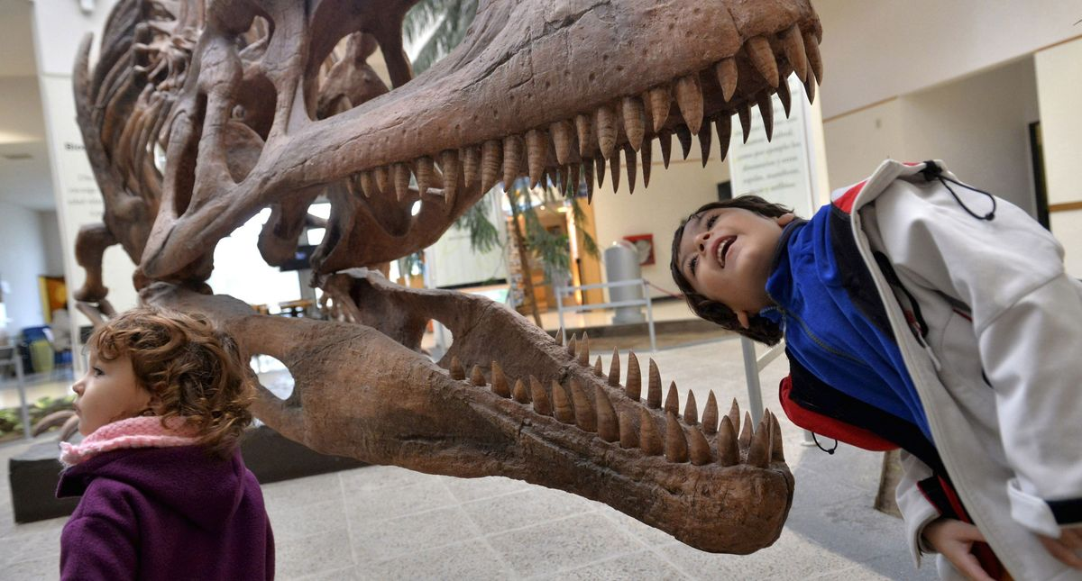 Scientists calculated how many T. Rexes lived on Earth — here's how