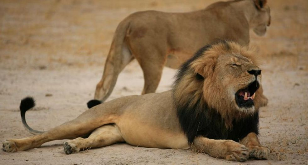 Why killing lions like Cecil is actually good for conservation