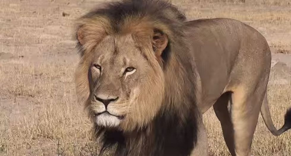 Lion-killing dentist Walter Palmer also preyed on women, sexual harassment claim reveals