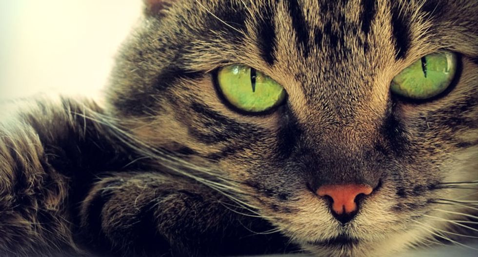 Scientists discover why cats have vertical pupils