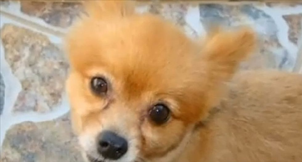 'WE BEAT IT 2 Death lol!': Missing Florida dog found with boastful note from apparent killers
