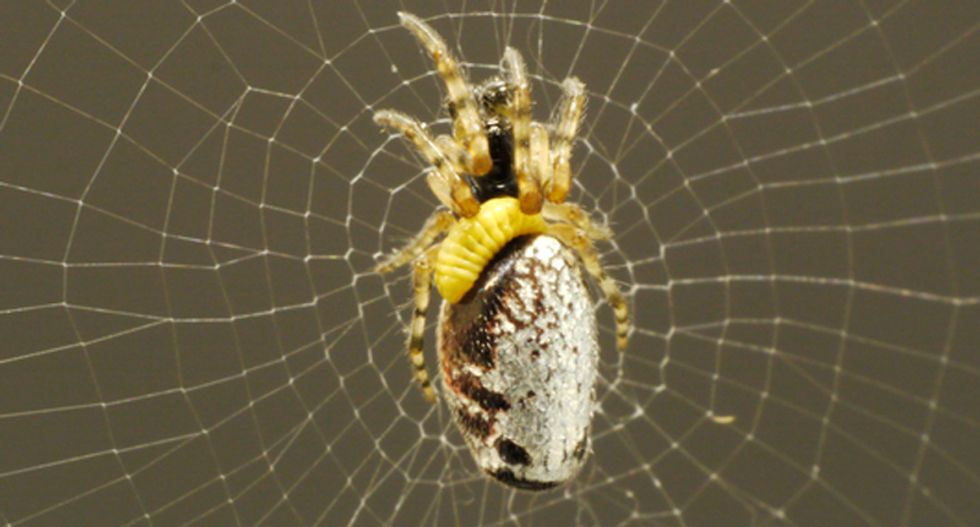 Mind-controlling wasps enslave zombie spiders to build them a perfect nest