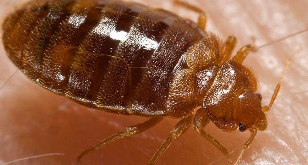 Trump resort sued over bed bug bites