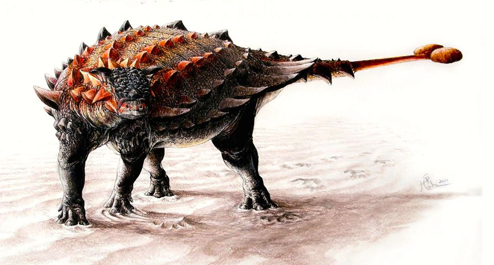 King of Clubs: A new twist in the origin of the ankylosaur's powerful tail