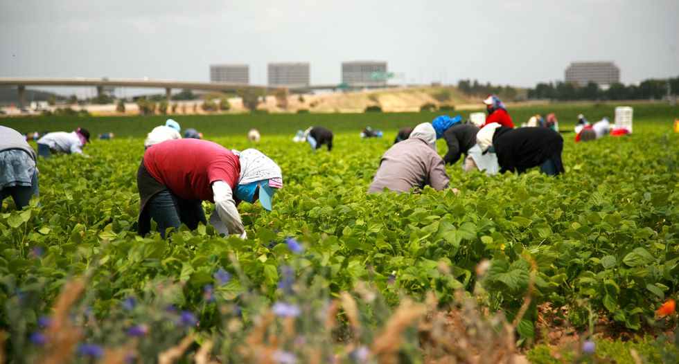 'Utterly arbitrary and unlawful': Farmworker groups sue to block Trump wage freeze