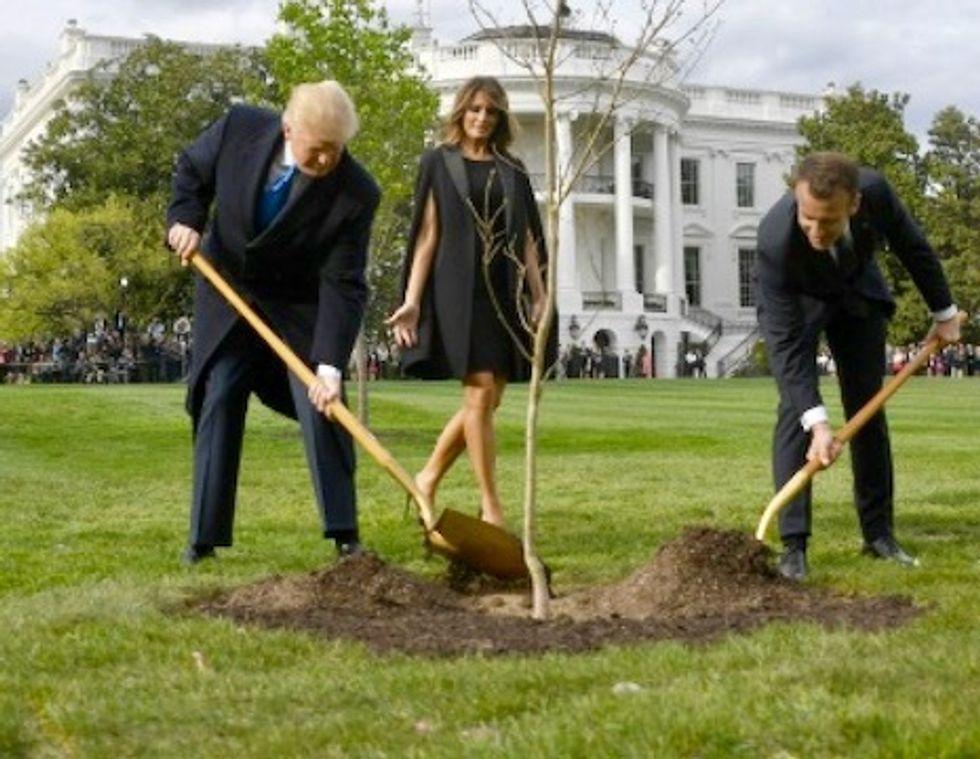 Tree symbolizing Trump-Macron friendship has died