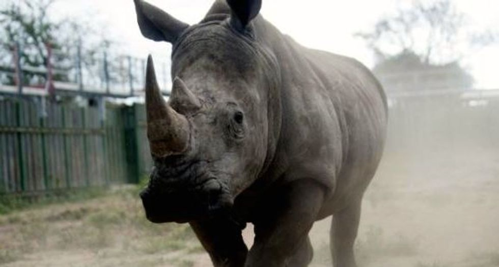 S. African breeders ask court to end rhino horn trade ban