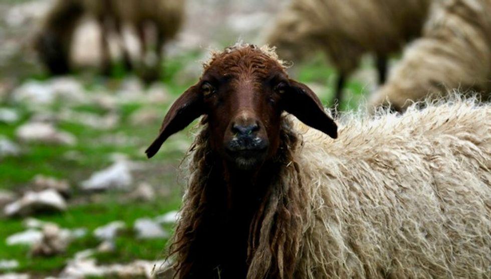Export ship blocked after 'shocking' Australia sheep footage