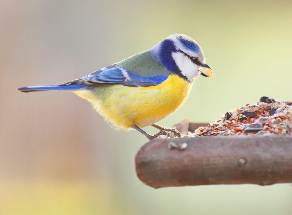 Study finds birds migrating to Britain because food is better