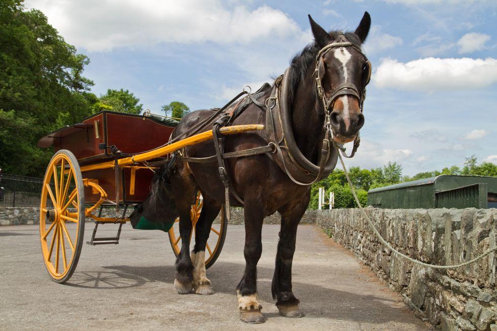 Two injured, horse killed in Nebraska accident involving horse-drawn cart